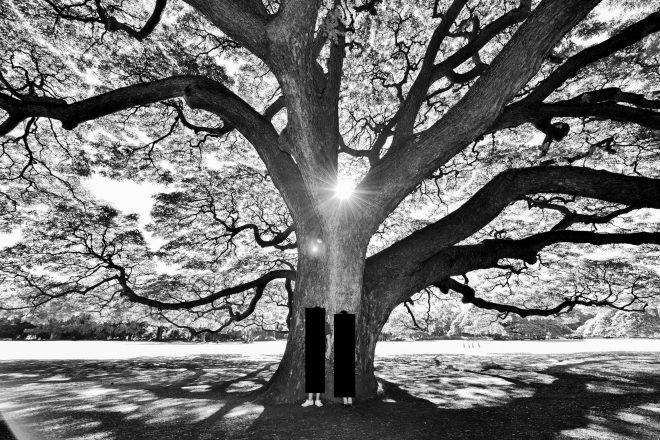 ハワイフォトウェディング・プロジェクトMさん撮影・木の画像・モノクロ