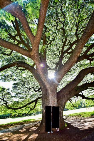 ハワイフォトウェディング・プロジェクトMさん撮影・木の画像・カラー