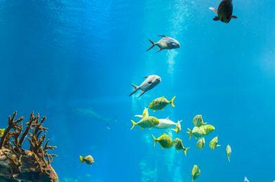 海底2万マイルの魚のイメージ